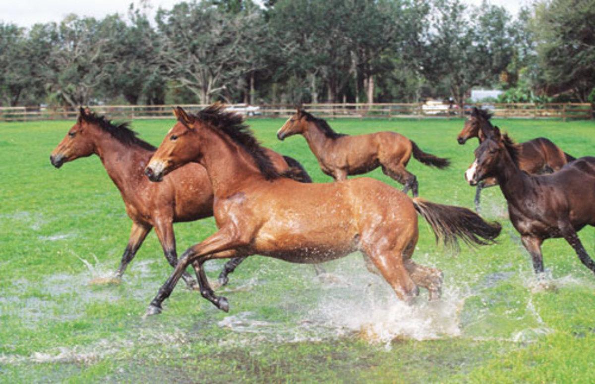 akcesoria dla koni
